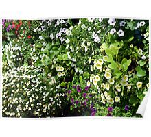 Colorful, many small flowers in the garden. Poster