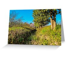 Orchard trees Greeting Card