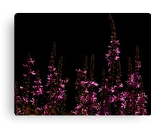Purple Loosestrifes Canvas Print
