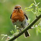 Robin in my Garden by AnnDixon