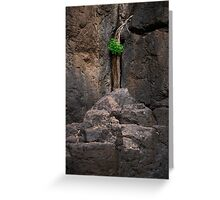 Cliff face in Springbrook National Park Greeting Card
