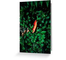 Leaves in the forest Greeting Card