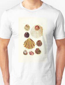 Thesaurus conchyliorum Monographs of genera of shells George Brettingham Sowerby 1887 V1-V5 087 T-Shirt
