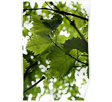 Green Summer Rain with Grape Leaves - Vertical Poster