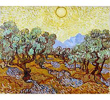Vincent van Gogh Olive Trees Photographic Print