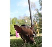 Small Dog Big World Photographic Print