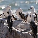 Birds of Chile by Dennis Cheeseman