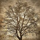 Birch Tree Silhouette by Madeleine Forsberg