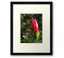 Red Prince Weigela Framed Print