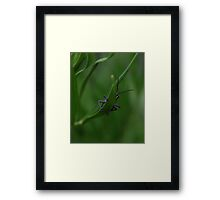 Bashful Grasshopper Framed Print