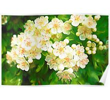 Bridal Wreath ( Abstract Painting ) Poster