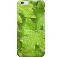 Spring Maples iPhone Case/Skin