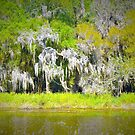 Spanish moss lollapalooza by ♥⊱ B. Randi Bailey