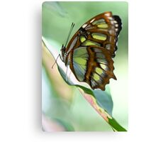 Madame Butterfly - Original Canvas Print