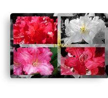 Love Rhododendrons Canvas Print