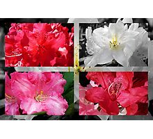 Love Rhododendrons Photographic Print