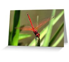 Beautiful Firecracker Dragonfly Greeting Card