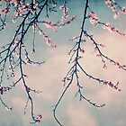 blossoms by Ingz