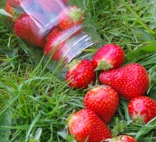 Spilling Strawberries Sticker