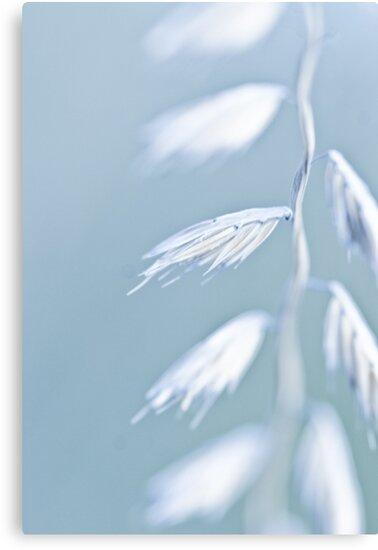 Seed by Jen Wahl