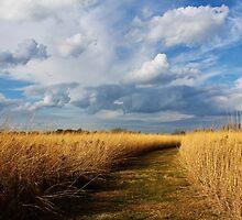Wyandot Wetland Meadows Preserve 2 by Shawna Rowe