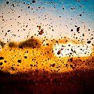 Dirt by Jen Wahl