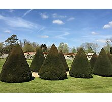 Topiary at Littlecote House Photographic Print