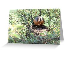 Face Off with Mama Bird Greeting Card