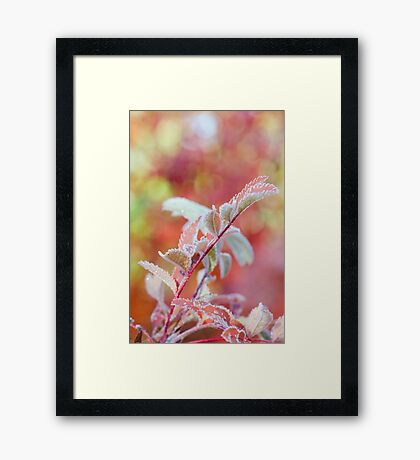 Frozen and Pink Framed Print