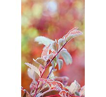 Frozen and Pink Photographic Print