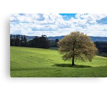 Beautiful Rolling Landscape  Canvas Print