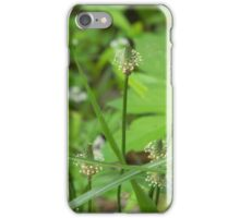 Plantain (?) in Weeds iPhone Case/Skin
