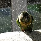 Shake, Rattle And Roll - Maroon-Bellied Conure NZ by AndreaEL