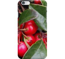 Teaberry Gaultheria procumbens iPhone Case/Skin