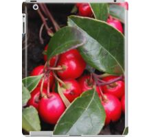 Teaberry Gaultheria procumbens iPad Case/Skin