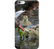 Greylag geese feeding goslings iPhone Case/Skin