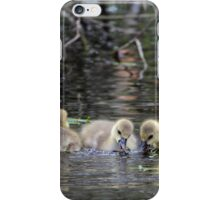 Greylag geese goslings iPhone Case/Skin