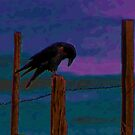 On the Fence by LaRoach