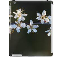 Flowers of a blackthorn or Sloe bush, Prunus spinosa. iPad Case/Skin