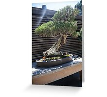 Zen Bonsai Greeting Card
