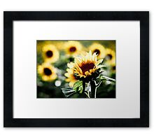 Sunflowers make me smile Framed Print