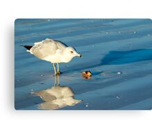 Seagull on Sarasota Florida Beach Canvas Print