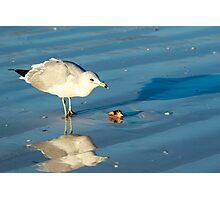 Seagull on Sarasota Florida Beach Photographic Print