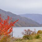 Grey Day, Red Tree by Harry Oldmeadow