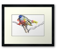 Bright Colorful Watercolor Bird Sketch  Framed Print