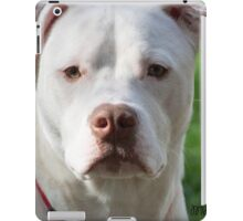 Young Pitbull iPad Case/Skin