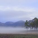 Widgee Dawn by Penny Kittel