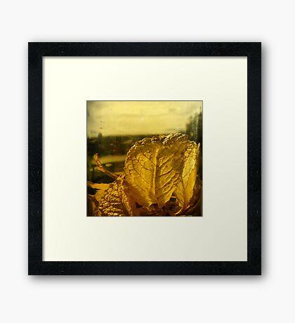 autumnal leaves Framed Print