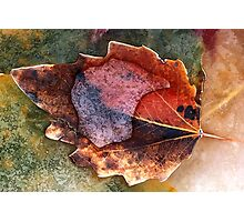 Autumn Leaf in Ice Photographic Print