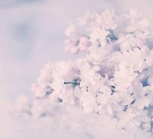 Lilacs in Spring by Angela King-Jones